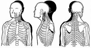 Levator Scapulae Trigger Point Referred Pain Patterns