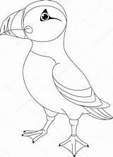 Puffin Coloring Kleurplaat Puffins Atlantic Atlantische Clip Colouring Papegaaiduiker Nest Vector Frailecillo Stockillustratie Maskonur Vogel Illustrations Template Depositphotos Colorear Sketch sketch template