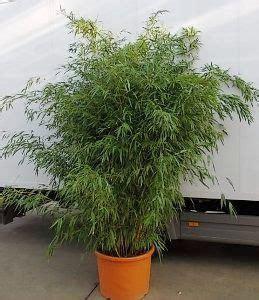 Baumschule-pflanzen: Große Pflanzen Und Bäume