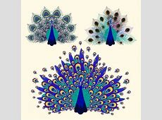 Peacock free vector download 147 Free vector for