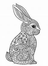 Coloring Pages Bunny Adults Adult Rabbit Printable Getcolorings sketch template