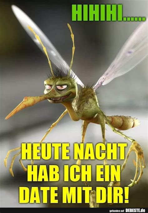 lustige bilder von muecken   lustig neue debeste