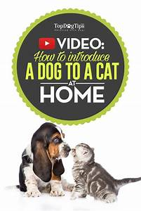 how to introduce a dog to a cat safely simple step by With how to introduce a puppy to a dog