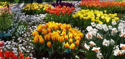 Tulpen Pflanzen Balkon by Zwiebelblumen Pflanzen Mit Diesen Tipps Gelingt Es