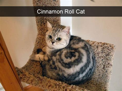 Hilarious Images 128 Hilarious Cat Snapchats That Are Im Paw Sible Not To