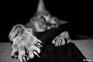 Anti Griffe Chat : pourquoi le chat se fait les griffes absolument chats ~ Premium-room.com Idées de Décoration