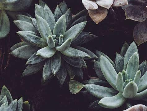 vintage cactus wallpaper iphone vintage images hd