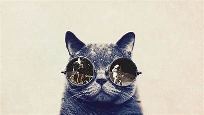 Funny Cat Cool Cats Wallpapers Background Wallpapertag