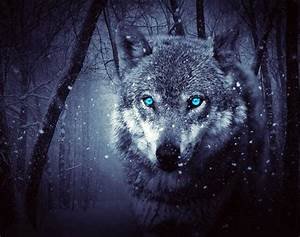 Blue And White Holiday Lights Blue Eyes White Wolf 5d Diamond Painting Kits Oloee