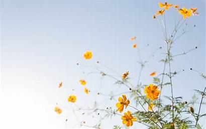 Simple Flower Flowers Background Yellow Wallpapers Desktop