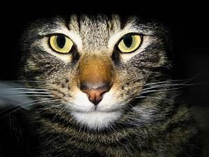 The Cat: Cats Wallpapers Desktop Backgrounds