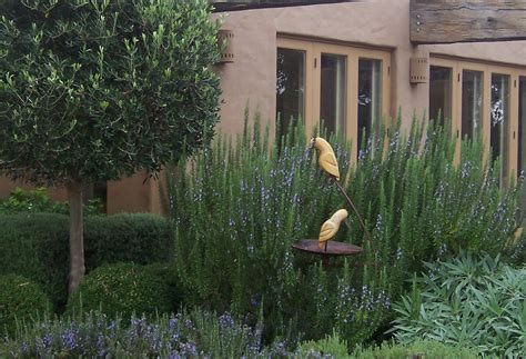 tuscan tree types rosemary and its irritating growth habits michael mccoy
