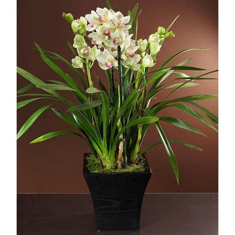 orchid plant pinterest