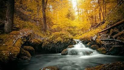 Nature Yellow Stream Foliage Daytime Covered Rock