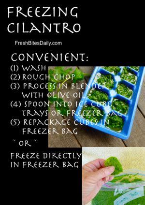 how to freeze fresh cilantro freezing cilantro