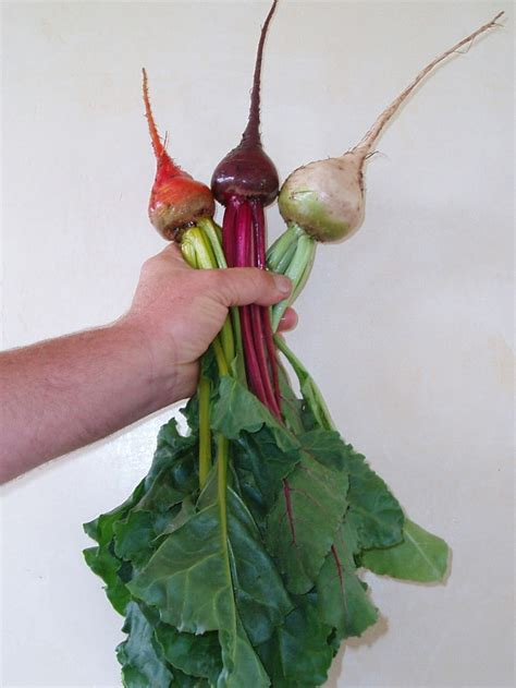 beet color mariquita farm s community supported agriculture