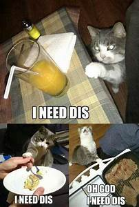 things only who cats will understand