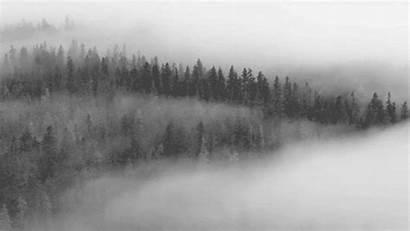 Fog Giphy Foggy Animated Gifs Forest Mist