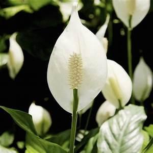 Grande Plante D Intérieur Facile D Entretien : fleur interieur liste ooreka ~ Premium-room.com Idées de Décoration