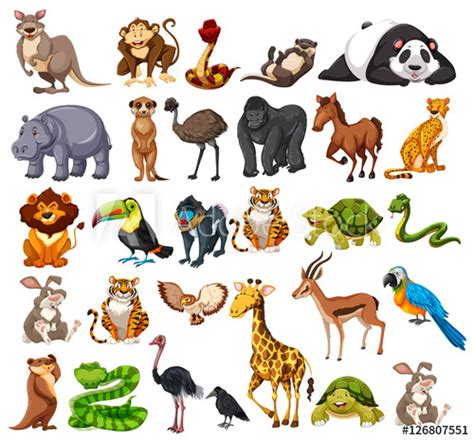 Different types of wild animals on white Buy this stock