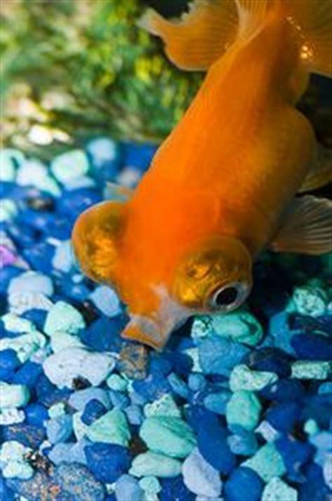 comment nettoyer le gravier de l aquarium