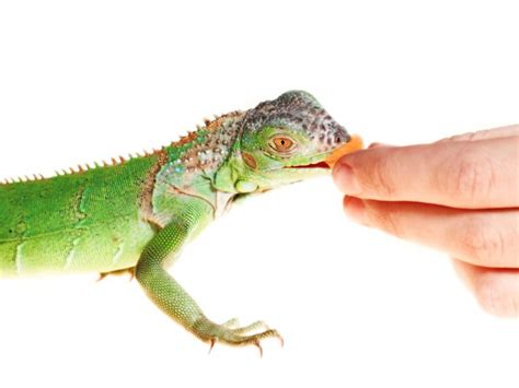 10 Fruits And Vegetables For Lizards