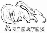 Anteater Coloring Ant Eater Animal Printable Animals Sheets Sheet sketch template
