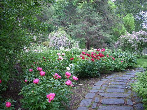 in the garden peony garden in the 171 winterthur garden