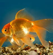 aquarium fish list  names  images  aquarium ideas