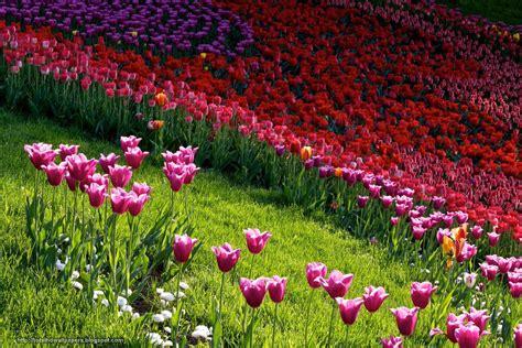 eleletsitz tulip garden images tulip gardens hd wallpapers 28 images tulips wallpapers wallpaper cave holland tulip