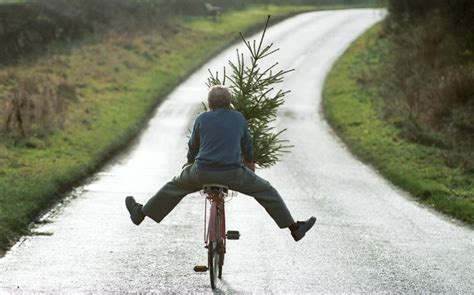 christmas tree  january  telegraph