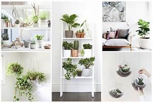 Plantes à Suspendre : superb plantes d interieur decoration 11 quand les ~ Premium-room.com Idées de Décoration