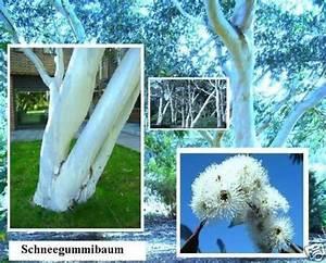 Winterharte Blumen Für Den Garten : exotische pflanzen fur den garten ~ Whattoseeinmadrid.com Haus und Dekorationen