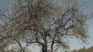 Apfelbaum Schneiden Anleitung : obstbaum richtig schneiden obstbaumschnitt erhaltungsschnitt sanierungsschnitt alter ~ Eleganceandgraceweddings.com Haus und Dekorationen