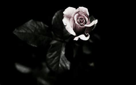 image result for black magic aesthetic flowers