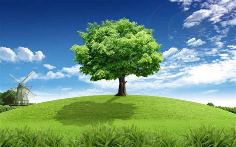 Tree Full Hd Pics Wallpapers 4175  Amazing Wallpaperz