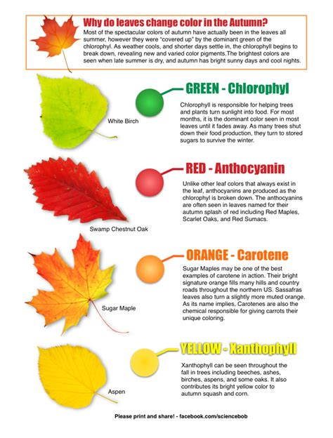 why do trees change color why do leaves change color in the fall sciencebob