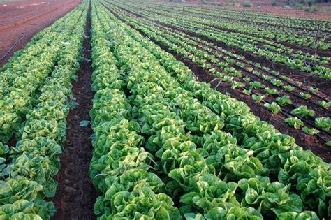 Chambre Regionale D Agriculture Paca Comment La R 233 Gion Veut Relancer L Agriculture En Provence