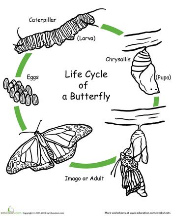 worksheets color the life cycle butterfly life cycles