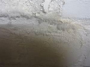 Salpeter In Der Wand : salpeter im keller besteht handlungsbedarf sanierung baum ngel frag die experten ~ A.2002-acura-tl-radio.info Haus und Dekorationen