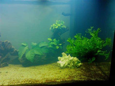 probleme eau verte aquarium probl 232 me d eau trouble blanche forum aquarium
