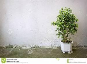 Baum Im Topf : kleiner baum im wei en topf auf hintergrundbetonmauer ~ Michelbontemps.com Haus und Dekorationen