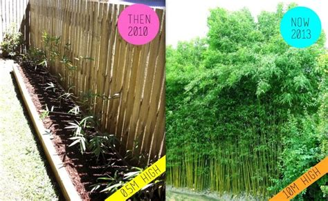 garden screening bamboo 55 best images about the great outdoors privacy fencing alternatives on pinterest chain