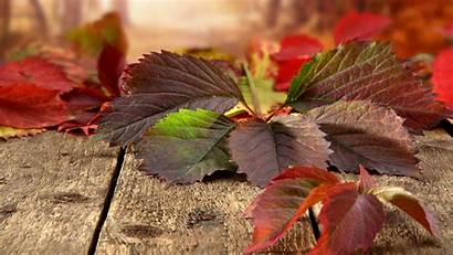 4k Nature Leave Ultra Wallpapers Widescreen Autumn