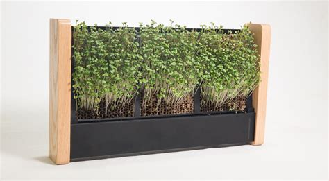 ecoqube tiny indoor vertical garden grows micro veggies