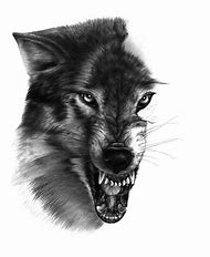 best wolf drawings ideas and images on bing find what you ll love