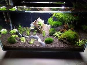 Aquarium Einrichten Pflanzen : die besten 25 aquarium einrichten ideen auf pinterest aquarium bepflanzen aquarium aquascape ~ Michelbontemps.com Haus und Dekorationen