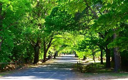 Road Tree Lined Hill Wallpapers Background Main