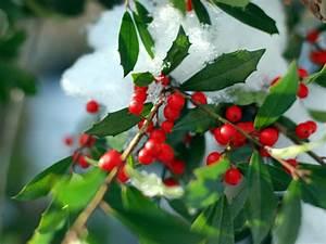 Arbre A Fruit : arbre fruits rouges tout ~ Melissatoandfro.com Idées de Décoration