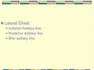 Nursereview Org Thorax  U0026 Lungs
